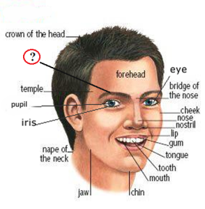face parts vocabulary